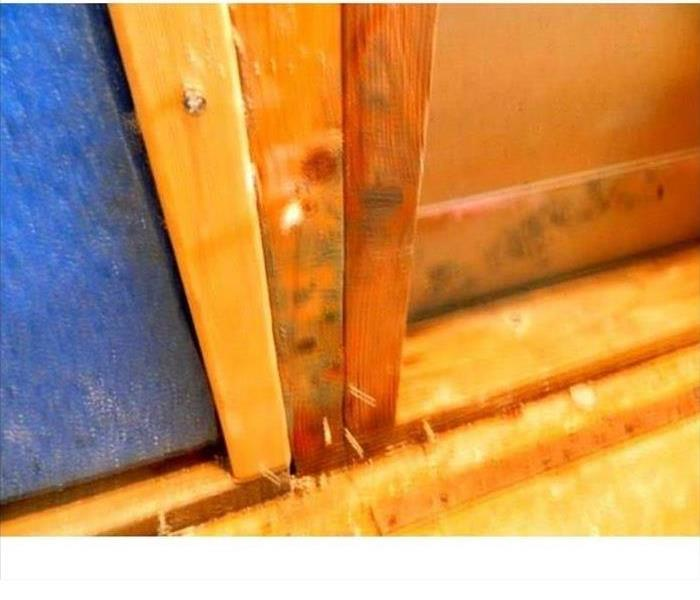 Mold Remediation How does Mold Remediation work?