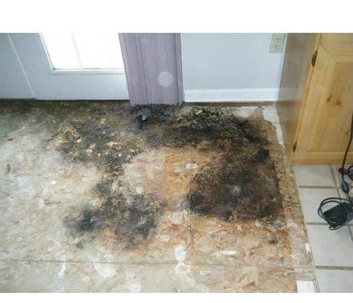 Mold Remediation When Mold Hits Your W. St. Joe County Home