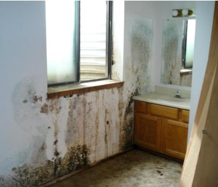 Mold Remediation Reduce Mold Growth For Your Property