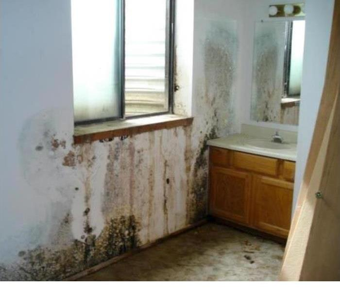 Mold Remediation Reducing Mold Growth For Your Property