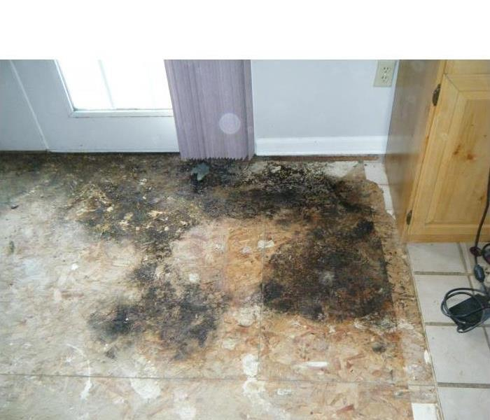 Mold Remediation Does Your South Bend Home Have A Mold Problem?